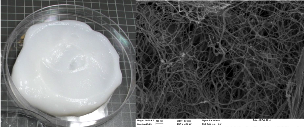 Figure. Left: Cellulose nanofibril gel produced by Masuko grinding.(Image source: Tiina Pöhler, et al., VTT (2010) Right: Scanning Electron microscope (SEM) image of cellulose nanofibrils. Scale: 100 nm (Image source: VTT).