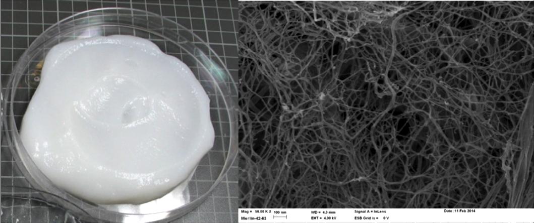 Figure. Left: Cellulose nanofibril gel produced by Masuko grinding.(Image source: Tiina Pöhler, et al., VTT (2010) Right: Scanning Electron microscope (SEM) image of cellulose nanofibrils. Scale: 100 nm (Image source: VTT).
